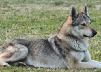 Notizia shock: Cane ucciso a bastonate e poi dato alle fiamme