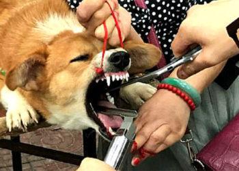 Giudice decide tramite sentenza di tagliare le corde vocali dei cani