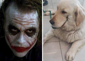 Cane torturato con coltelli e fuoco per farlo somigliare a....